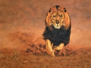 aslan resmi 300x225 Birbirinden Vahşi Hayvanlar